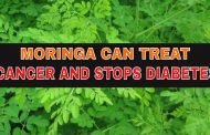 Moringa Supplements Weapon Against Cancer